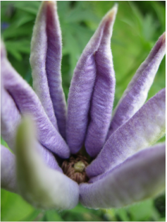 Flower Reiki 1