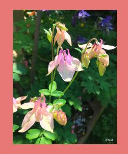 Ferneinweihung, Pflanzendeva, Spirit