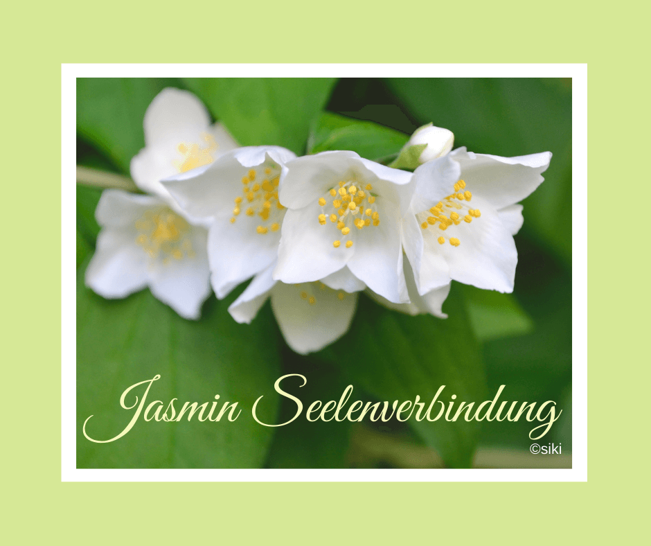 Jasmin, Spirit, Energie, Einweihung