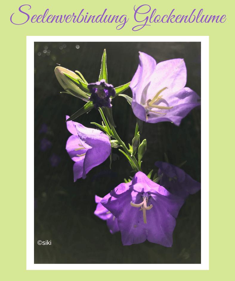 Glockenblume, Spirit, Einweihung