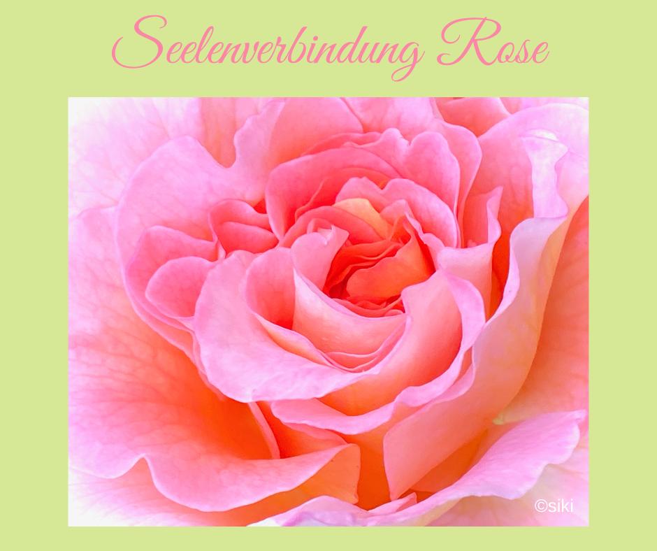 Rose Einweihung Pflanzenspirit Silke Kitzmann