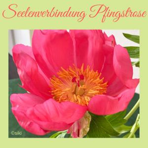 Pfingstrose, Einweihung, Pflanzenspirit